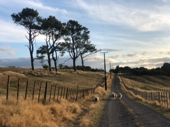 Perfekte Leistung zu geringen Kosten: Neuseeland im BnB genießen