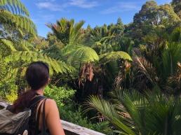 Mitten im Dschungel: Neuseeland-Kosten blieben trotz unglaublicher Erlebnisse voll im Rahmen